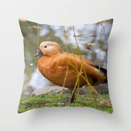 Tadorna Ferruginea Throw Pillow
