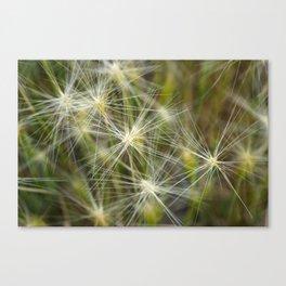 Late summer cheatgrass Canvas Print