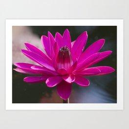 Floating Flower Solo Art Print