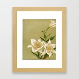 Flowers from Dell and Bower, 1896. Framed Art Print