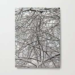 Tangled twigs covered in snow Metal Print