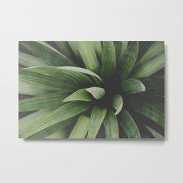 Yucca Metal Print