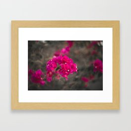 Bougie with the Bougainvillea Framed Art Print