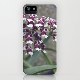 Longwood Gardens Autumn Series 247 iPhone Case
