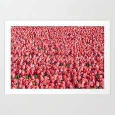 Mostly Tulips Art Print