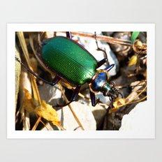 green beetle Art Print