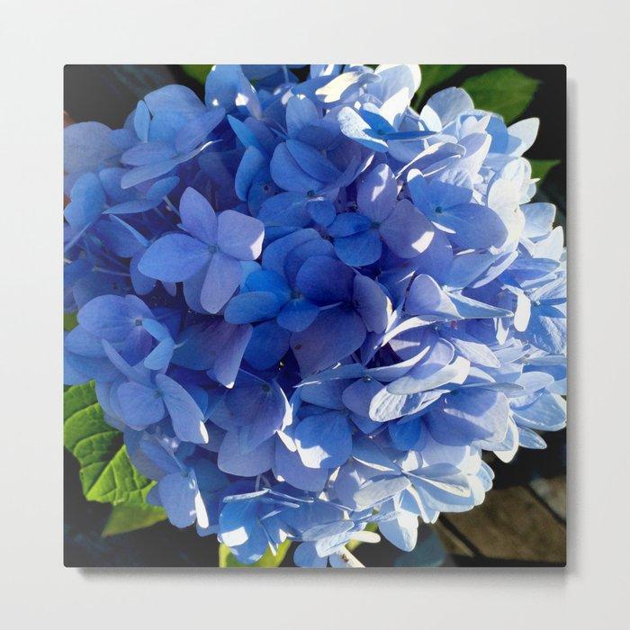Blue Hydrangia Flower Blossom Metal Print