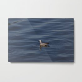 Seagull at the ocean Metal Print