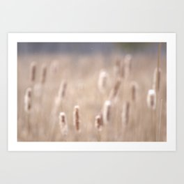 Fall Cattails Art Print
