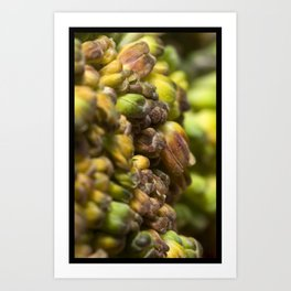 SPROUT #2 Art Print