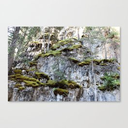 Feigned Vaughan Canvas Print