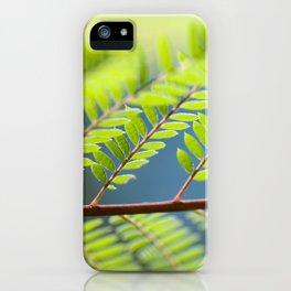 Jacaronda Mimosifolia Serie 1 No. 3 iPhone Case