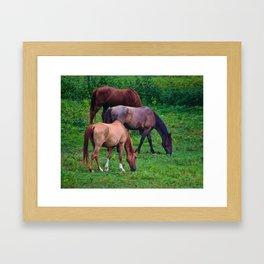 Grazing Horses Framed Art Print