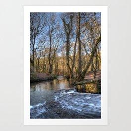 Cannop Brook II Art Print