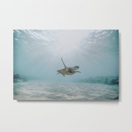 sea turtle iii Metal Print