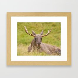 Mr Moose Framed Art Print