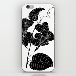 Bush Potato (Also known as Desert Yam) - Ipomoea costata iPhone Skin