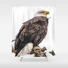January Bald Eagle Shower Curtain
