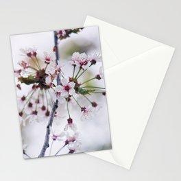White Cherry Blossom - Sakura Stationery Cards