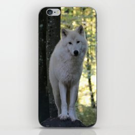 The curious wolf iPhone Skin