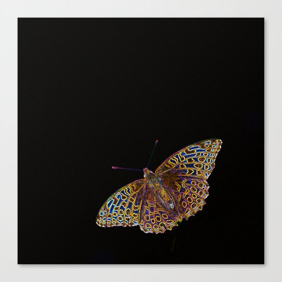 Butterfly on a black background Canvas Print