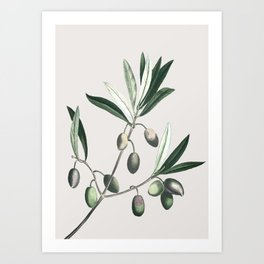 Olive Tree Branch Art Print
