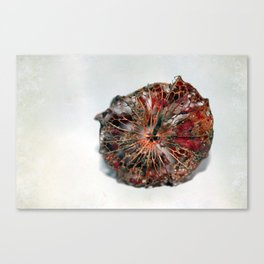 Physalis Part VII. Canvas Print