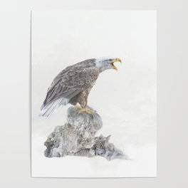 Bald eagle in winter snow Poster