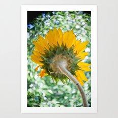 Sun Stalk Art Print