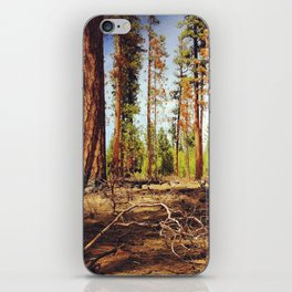 Burnt Ponderosa Forest iPhone Skin