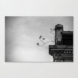 : roots : Canvas Print