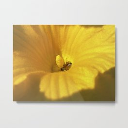 pumpkin bloom II Metal Print