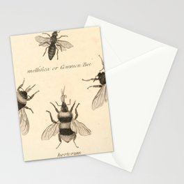 Naturalist Bees Stationery Cards