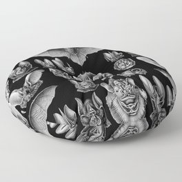 1904 Haeckel Chiroptera Floor Pillow