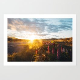 Lupine flowers  Art Print
