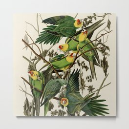 Carolina Parrot - John James Audubon's Birds of America Print Metal Print
