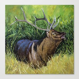Elk Fine Art  Print Canvas Print