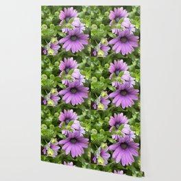 Longwood Gardens Orchid Extravaganza 41 Wallpaper