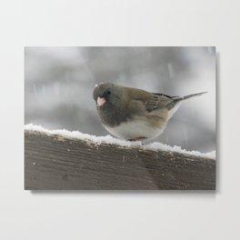 Snowy Junco Metal Print