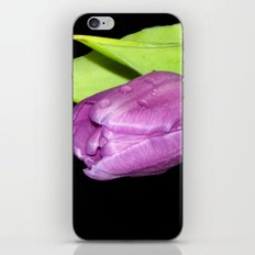 Purple Tulip iPhone & iPod Skin