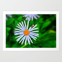Blue daisy and a ladybird Art Print