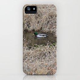 The Majestic Mallard iPhone Case