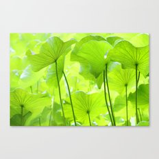 Lotus Leaves Canvas Print