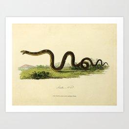 Snake by Sarah Stone, 1790 Art Print