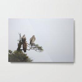 Vulture Vibe Himilayan 3 Metal Print