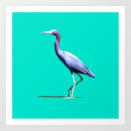 Little Blue Heron Art Print