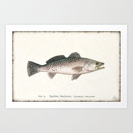 """Spotted Sea Trout"" by Amber Marine - Cynoscion nebulosus ~Watercolor Illustration, (Copyright 2013) Art Print"