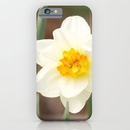 The warmth of spring narcissus (lent lily) iPhone Case