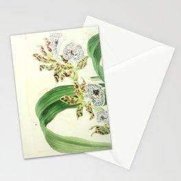 Flower 1433 eulophia mackaiana Mr Mackay s Eulophia16 Stationery Cards
