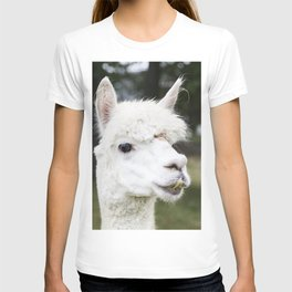 A llama peers at a passerby from its copse on a farm near Plato in LaGrange County Indiana T-shirt
